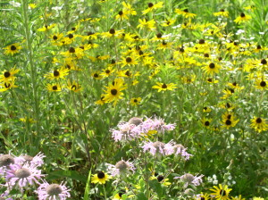 Invasive plant removal creating a natural ecosystem for plants and animals alike